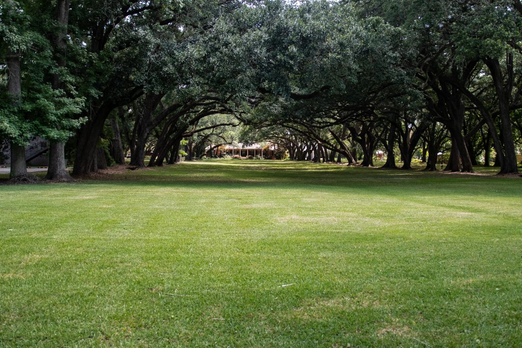 Un bel viale di ingresso ad una delle piantagioni lungo il Mississippi