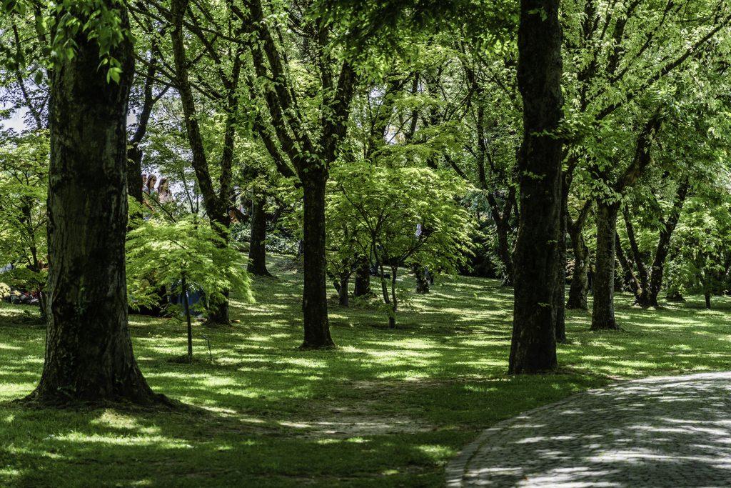 romantico vialetto tra gli alberi nel parco giardino Sigurtà di Valeggio sul Mincio