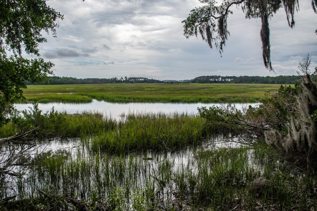 paludi intorno alla Wormsloe Plantation di Savannah