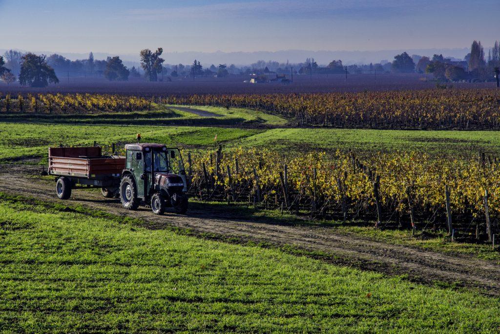 un trattore tra i filari delle vigne di Saint Emilion