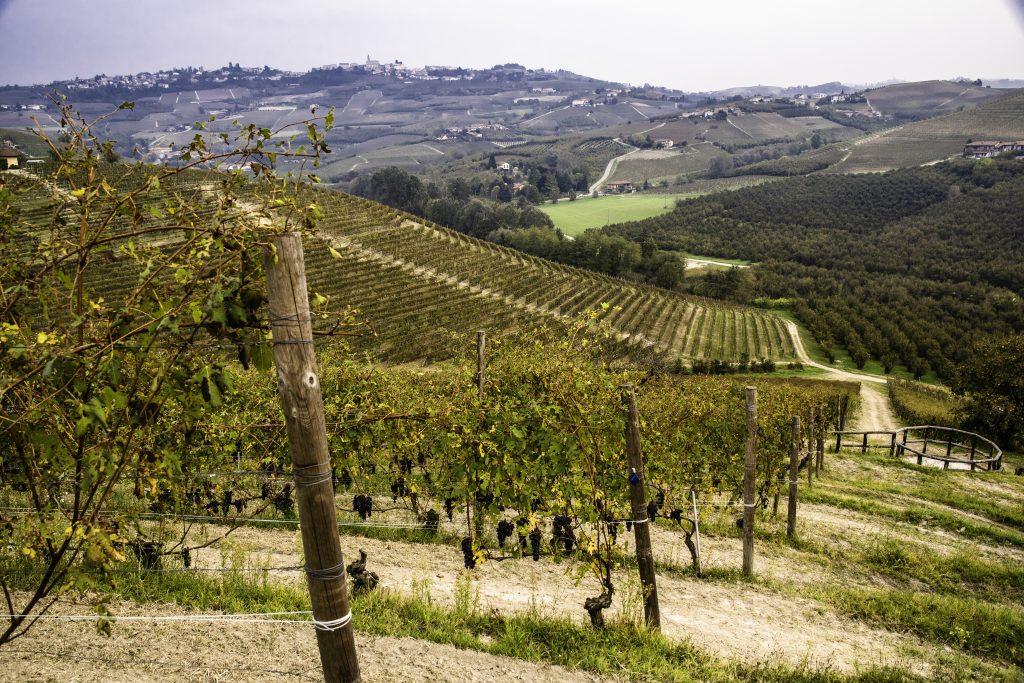 La perfezione delle vigne nella Langa del Barolo