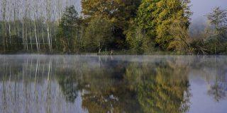 gli alberi si rflettono sull'acqua