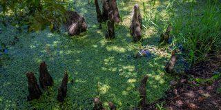 bayou della Louisiana