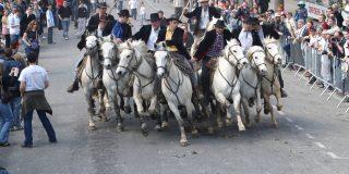 Corsa camarghese con i cavalli